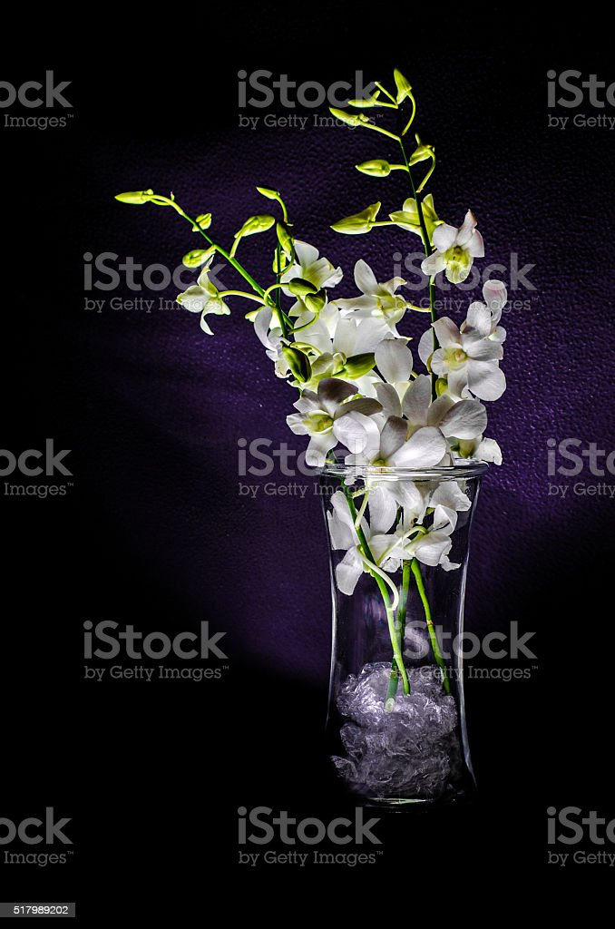 Small white orchid in a vase stock photo