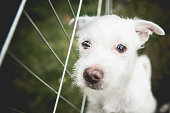 Small White Shelter Dog Terrier Mix