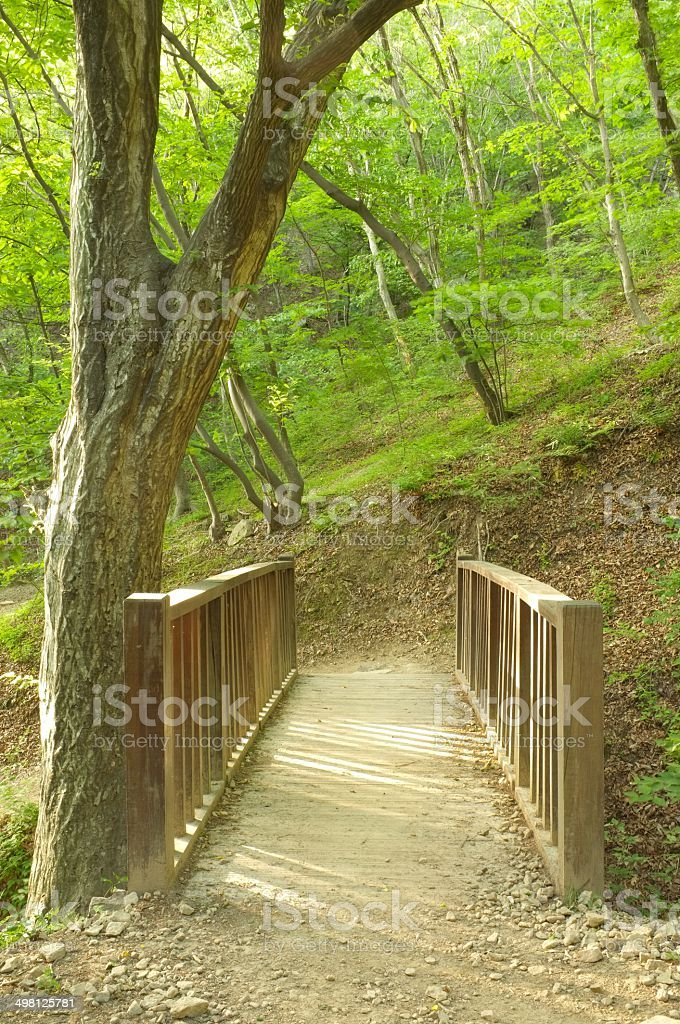 Small wooden brigde in forest stock photo