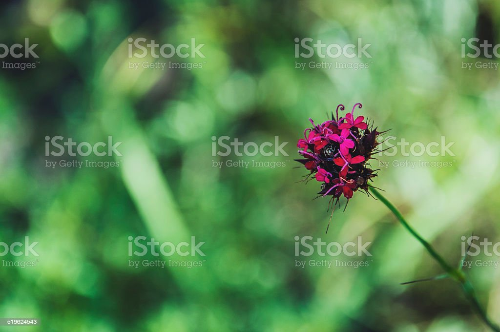 Flower in the middle of the mountain.