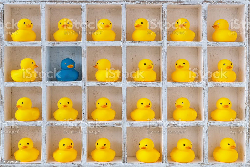 Small yellow rubber ducks in pigeon holes, one blue duck. stock photo
