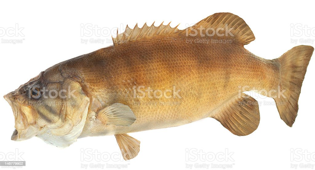 Smallmouth Bass Side View royalty-free stock photo