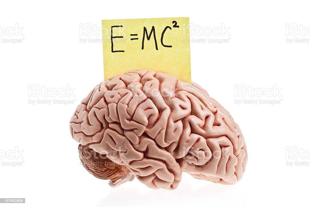 Smart Brain royalty-free stock photo