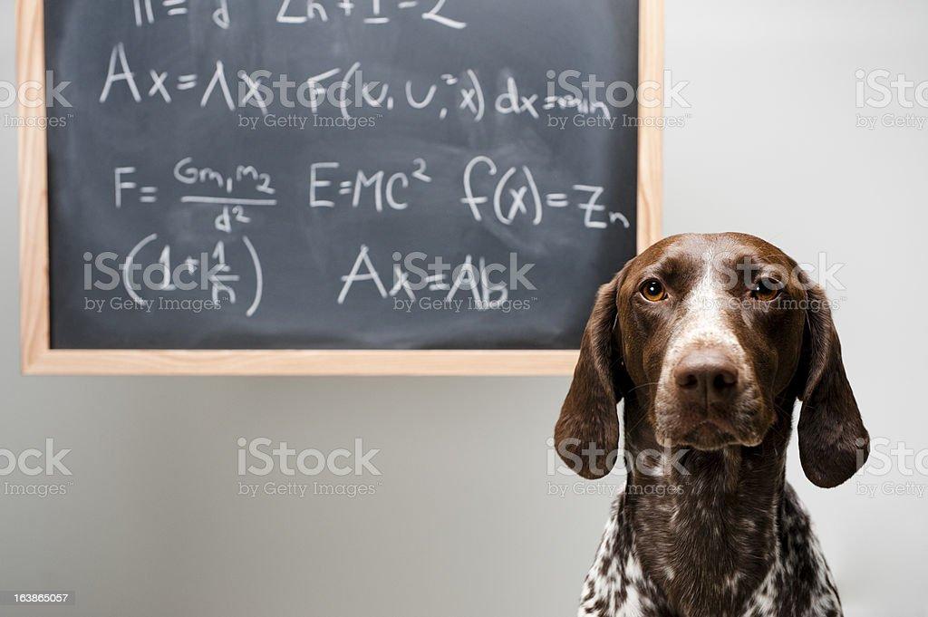smart dog royalty-free stock photo