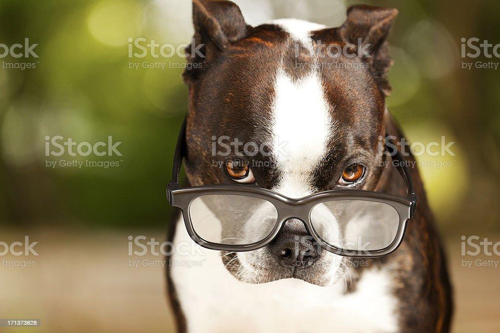 Smart Dog stock photo