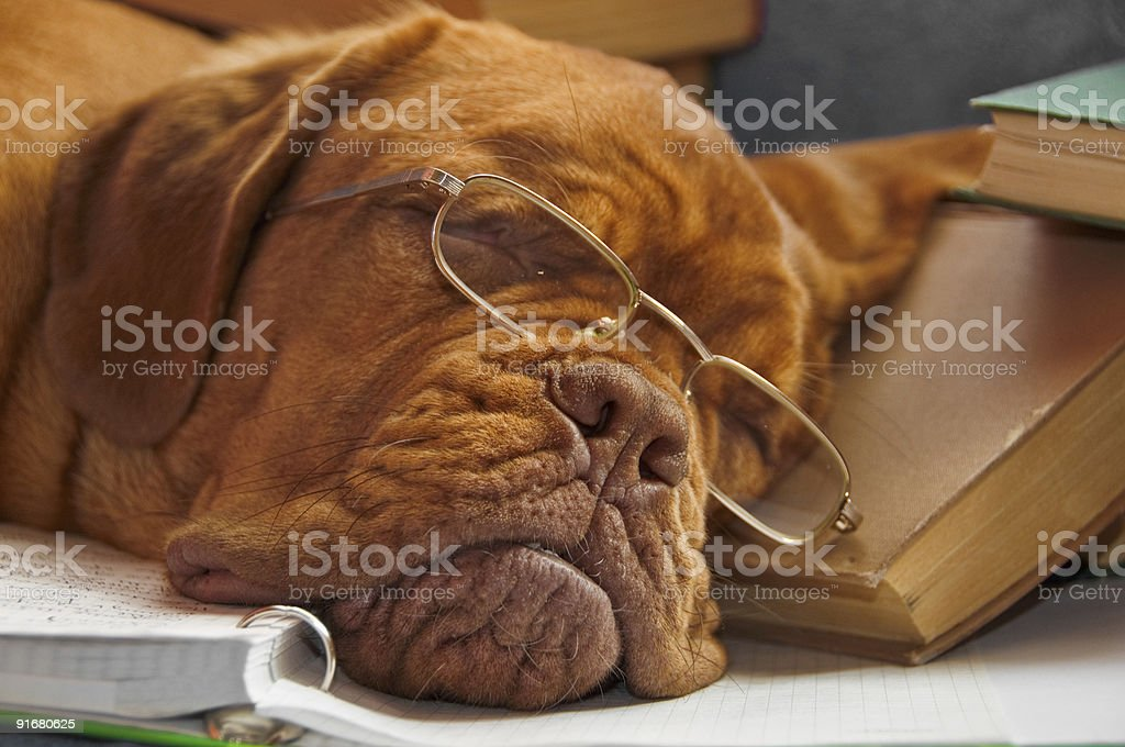 Smart Dog Sleeping in Books royalty-free stock photo