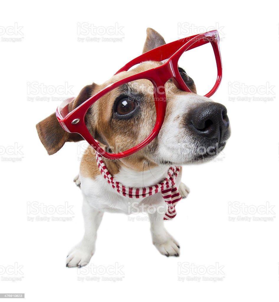 Smart fashion Dog stock photo