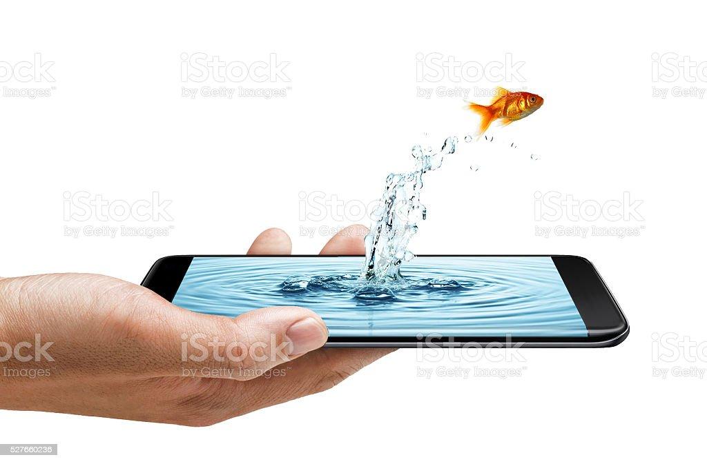 Smart phone edge screen - water splash and fish stock photo