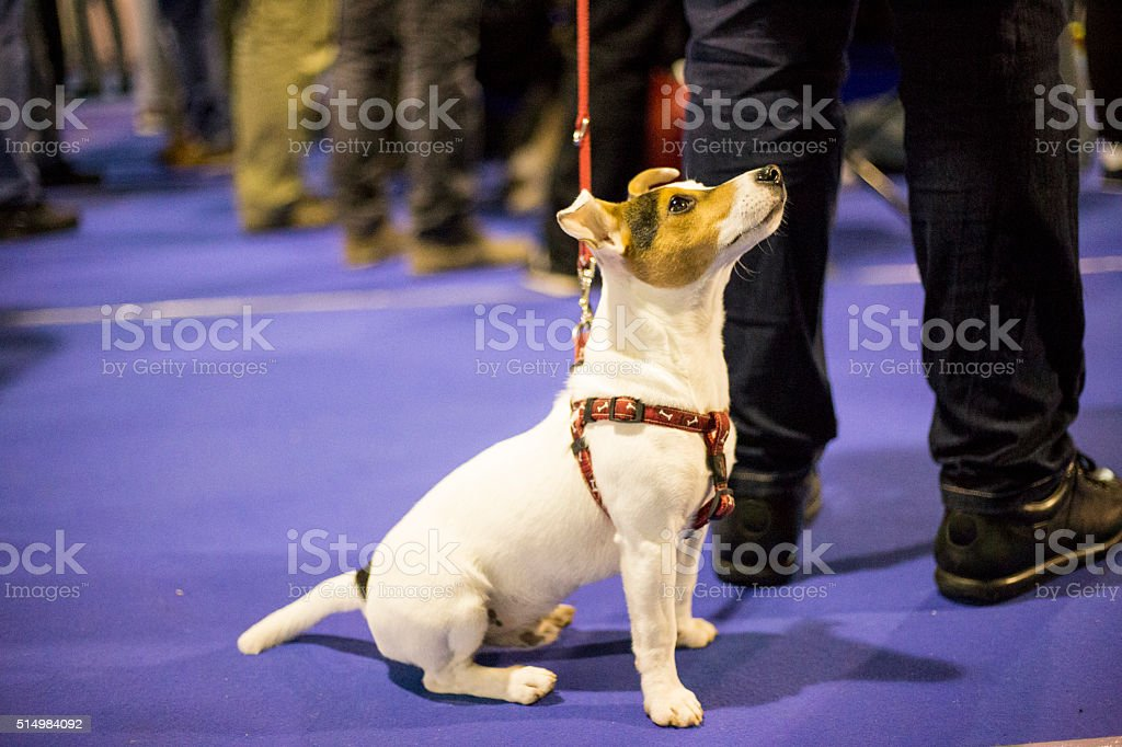 Smart small dog waiting award stock photo