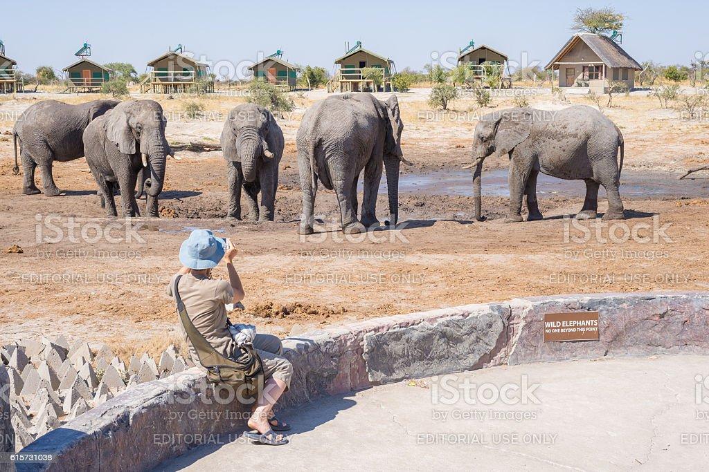 Smartphone photographer close to Elephants, Africa stock photo