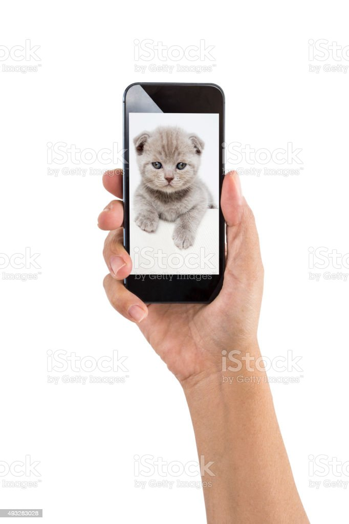 Smartphone with Cute Kitten stock photo