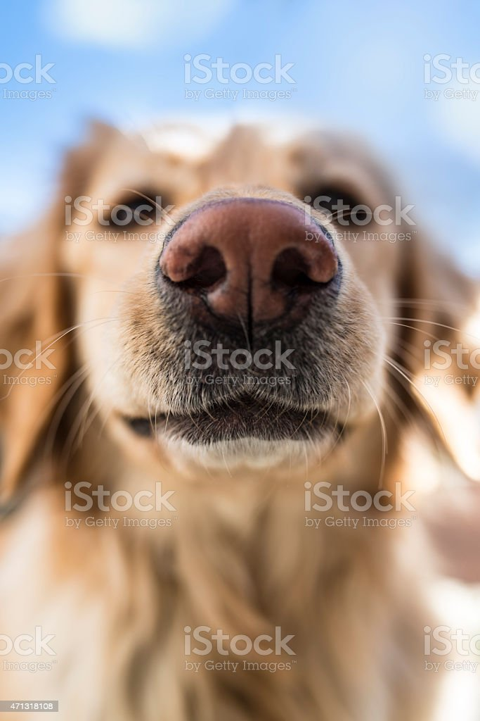 I Smell Something! stock photo