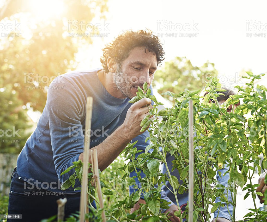 Smells divine... stock photo