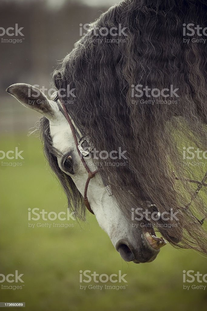 Smile and bow royalty-free stock photo