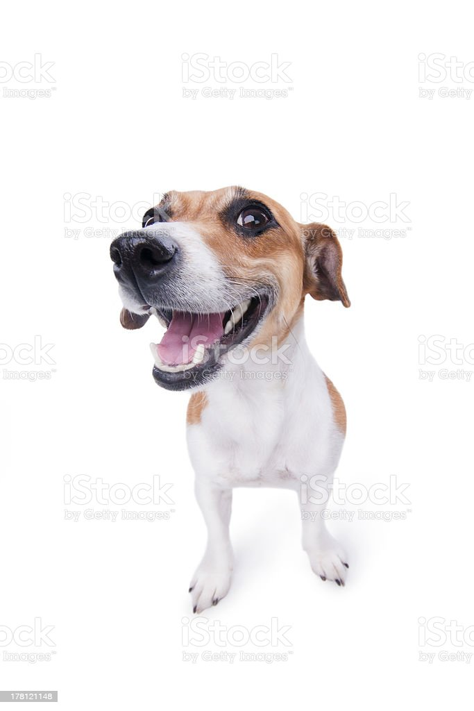 smile emotional animal stock photo