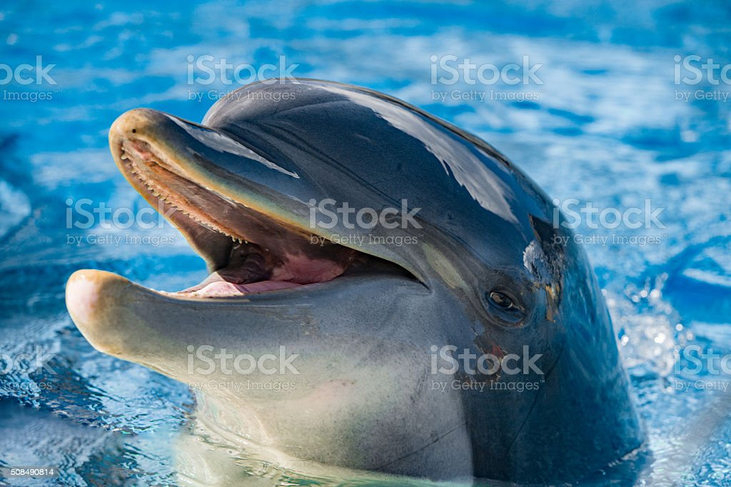 smile of a dolphin looking at you stock photo