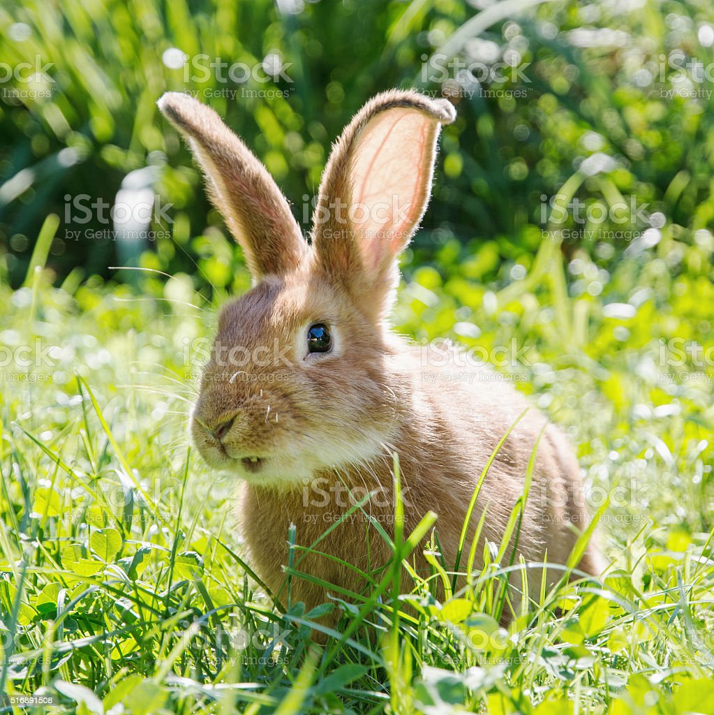 Smiley bunny in green grass, easter bunny stock photo