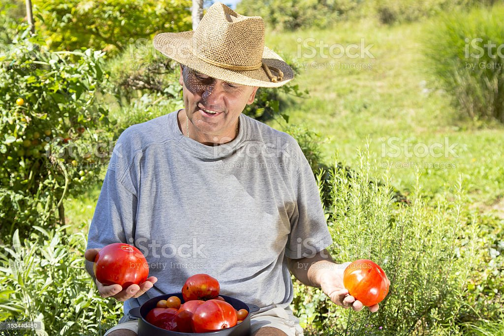 Smiling and happy man showing big organic tomatoes royalty-free stock photo