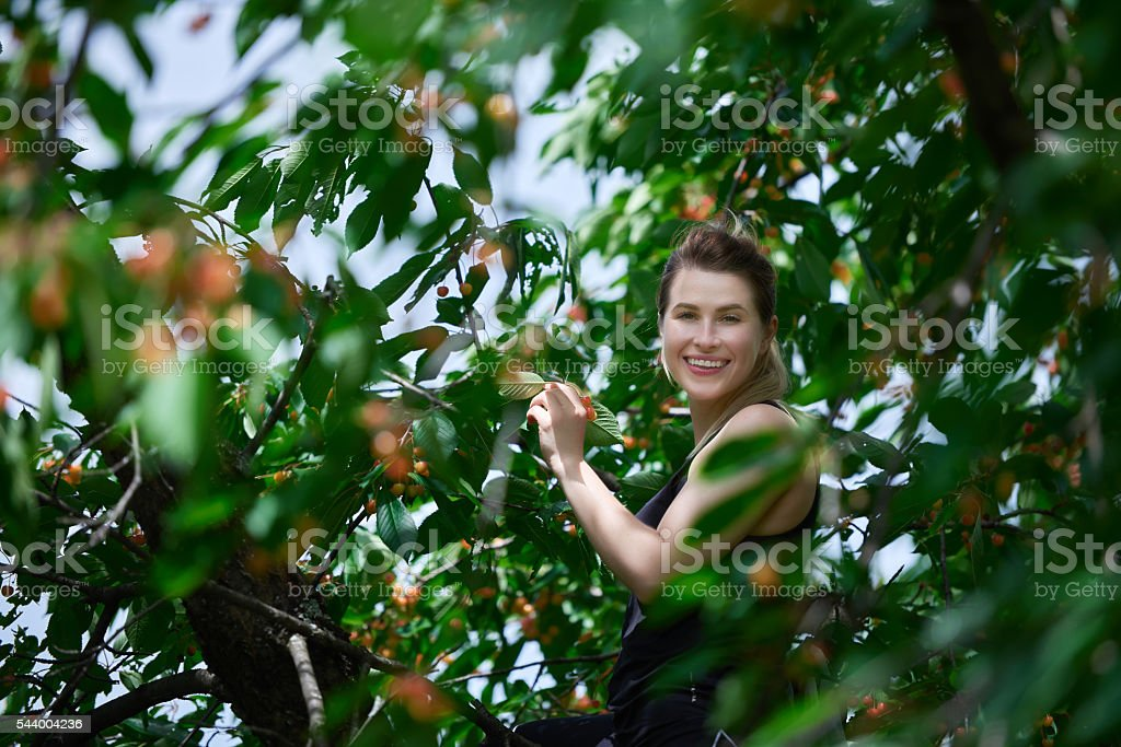 smiling and picking cherries stock photo