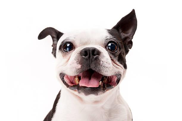 Free Vet Shots For Dogs