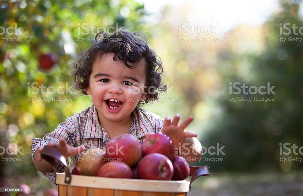 Smiling Boy With Basket of Freshly Picked Minnesota Apples. royalty-free stock photo
