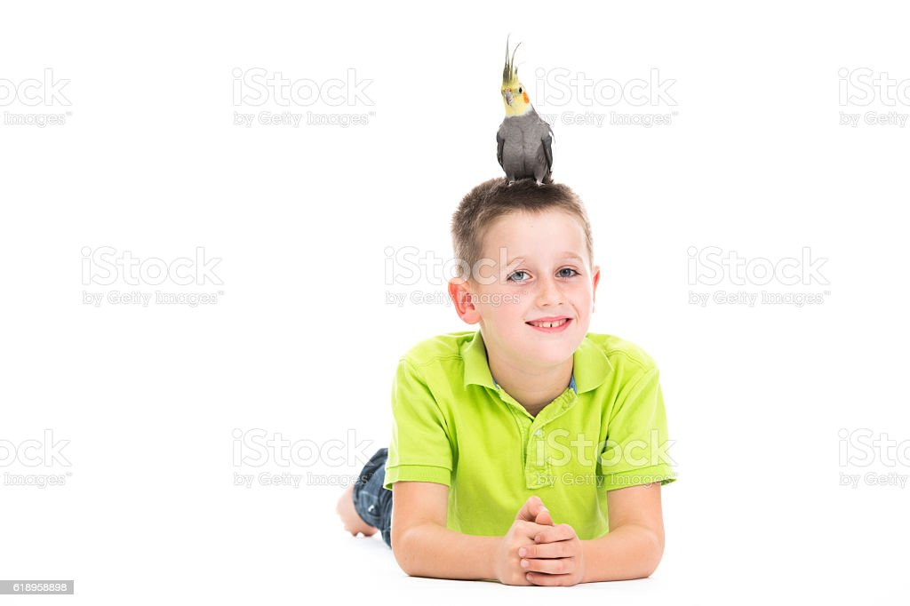 smiling boy with cockatiel on white stock photo