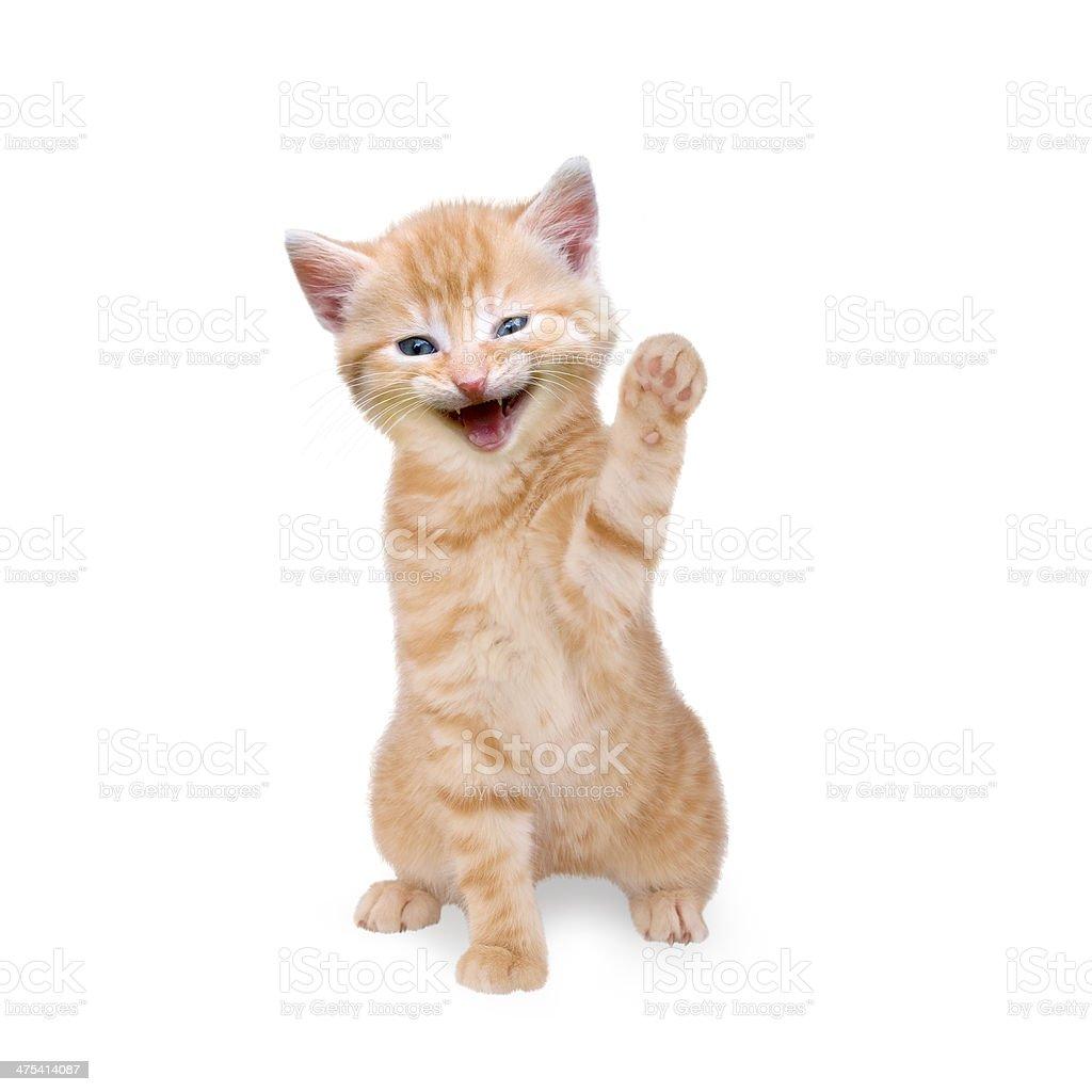 smiling cat isolated on white background stock photo
