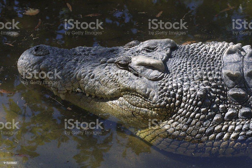 Smiling Crocodile stock photo