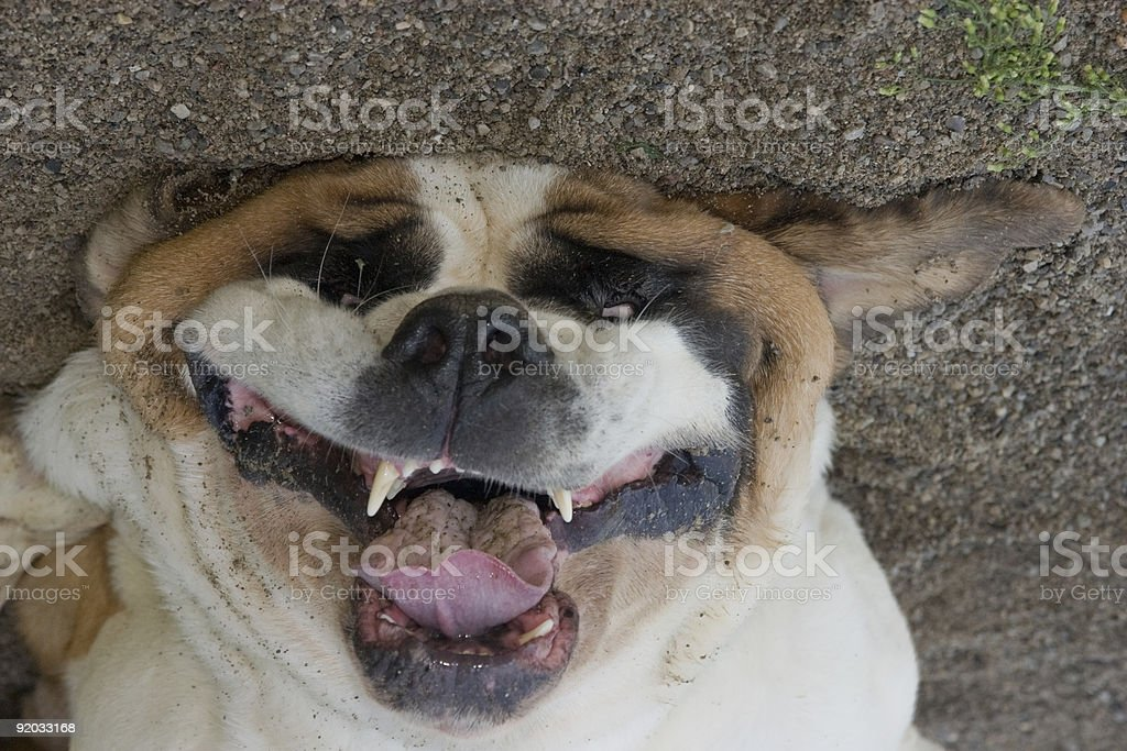 Smiling Dog in sand stock photo