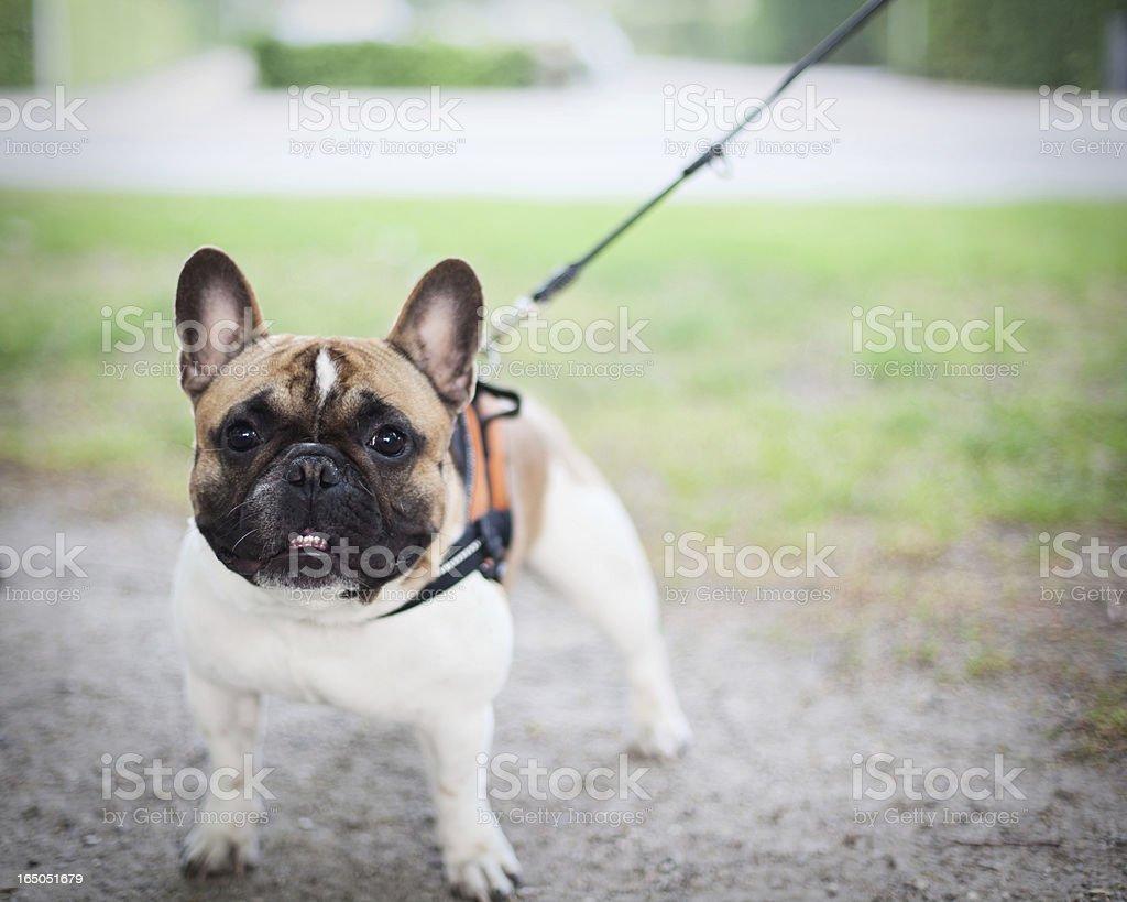 smiling dog royalty-free stock photo