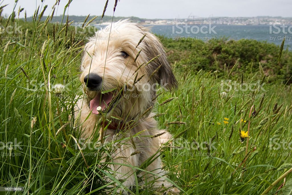 Smiling dog stock photo