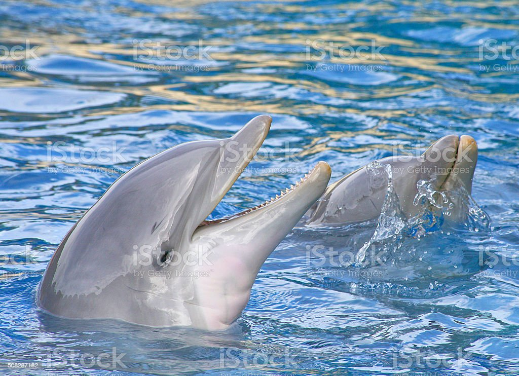 Smiling dolphins stock photo