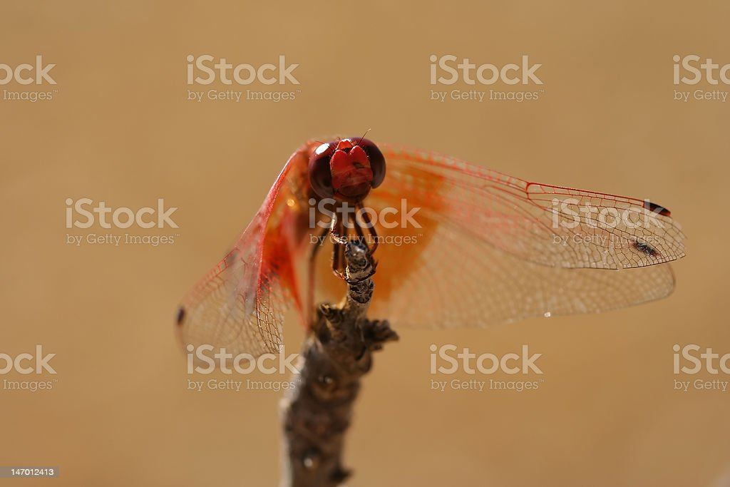 Smiling dragonfly stock photo