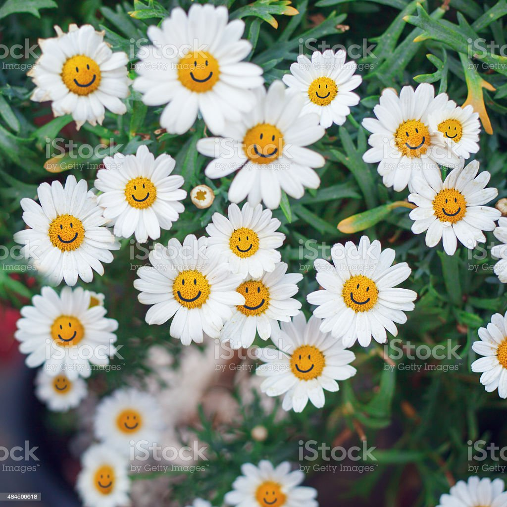 smiling face of flower at summer time stock photo