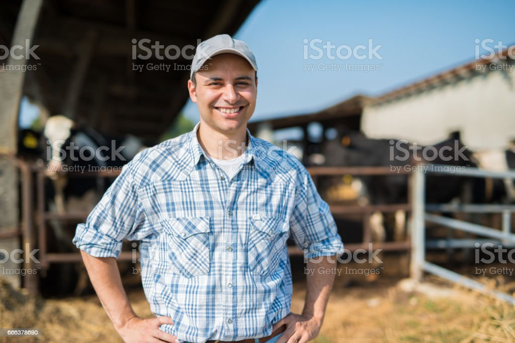 Smiling farmer in front of his cows stock photo