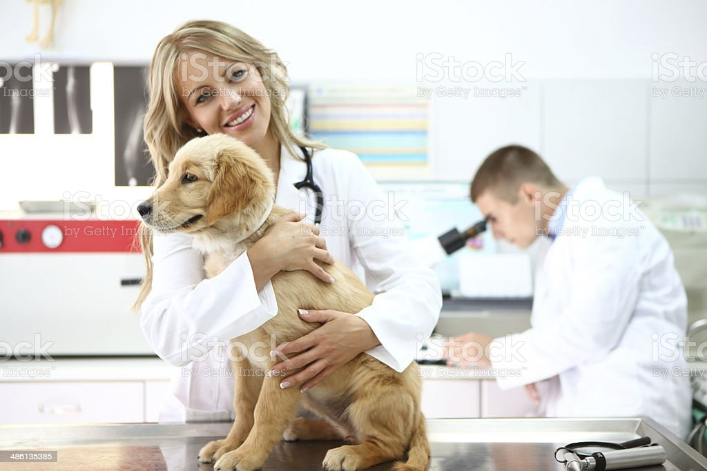 Smiling female vet with retriever puppy. royalty-free stock photo