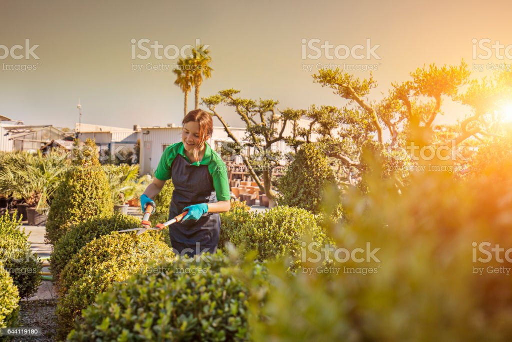 Smiling female worker pruning plants on farm stock photo