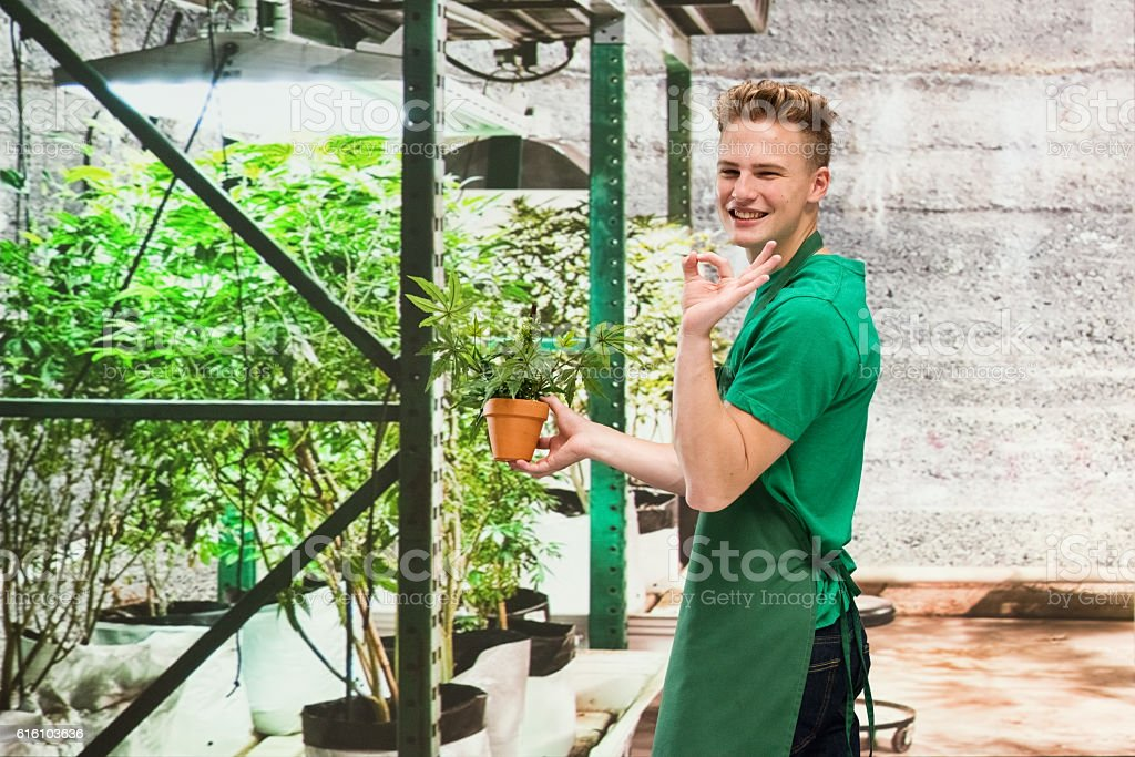 Smiling florist giving ok sign in marijuana plant stock photo