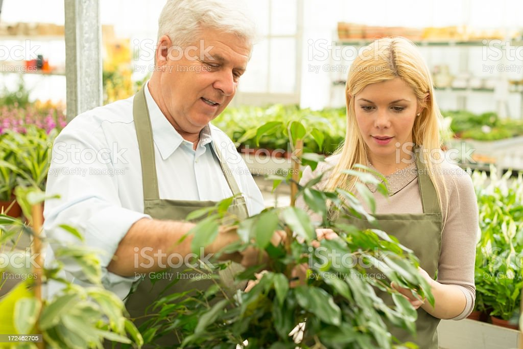 Smiling Florists working in greenhouse royalty-free stock photo