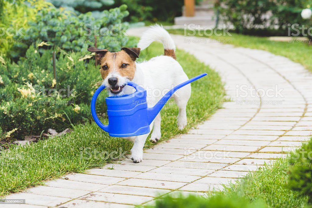 Smiling Gardener with a watering can stock photo