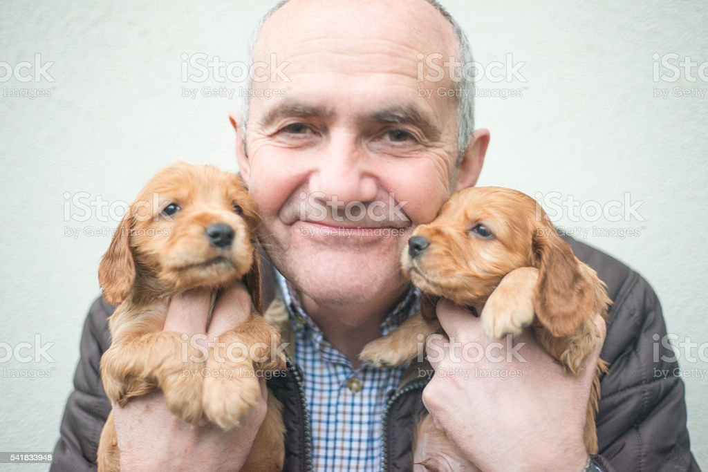 Smiling handsome man with cocker spaniel puppies stock photo