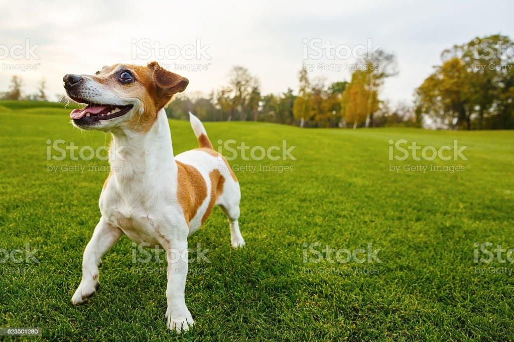 Smiling happy dog stock photo