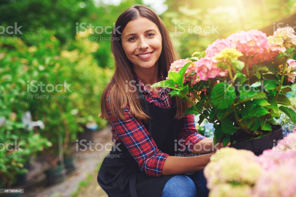 Smiling happy woman displaying a pink hydrangea stock photo
