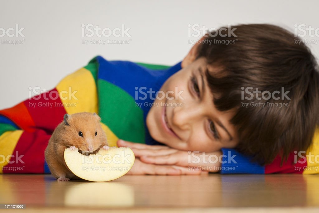 Smiling Kid Looking To A Hamster, Selective Focus stock photo