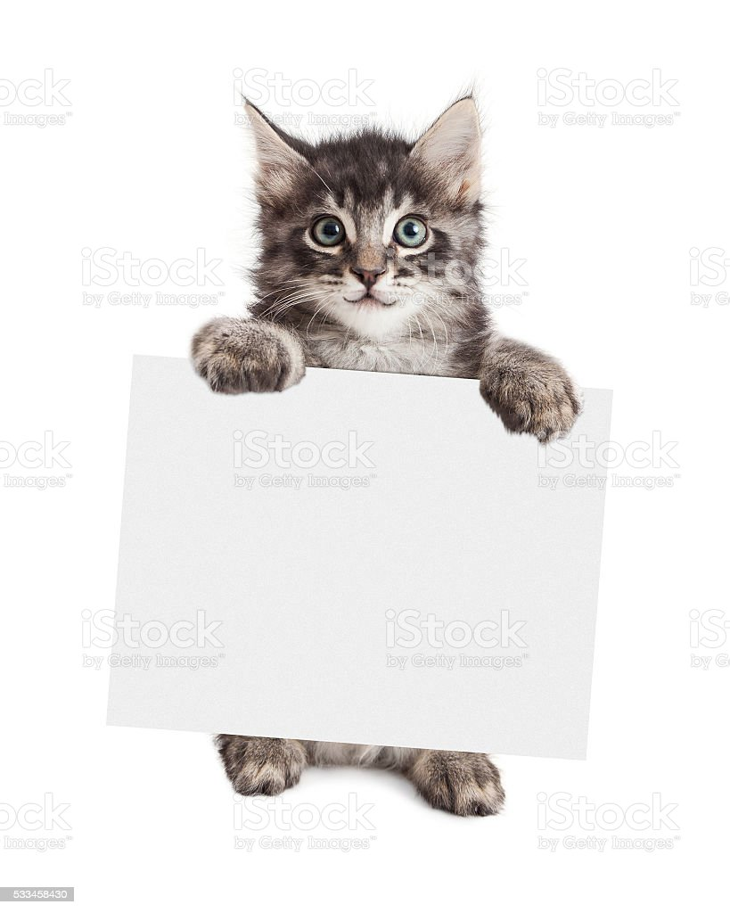 Smiling Kitten Holding Blank Sign stock photo