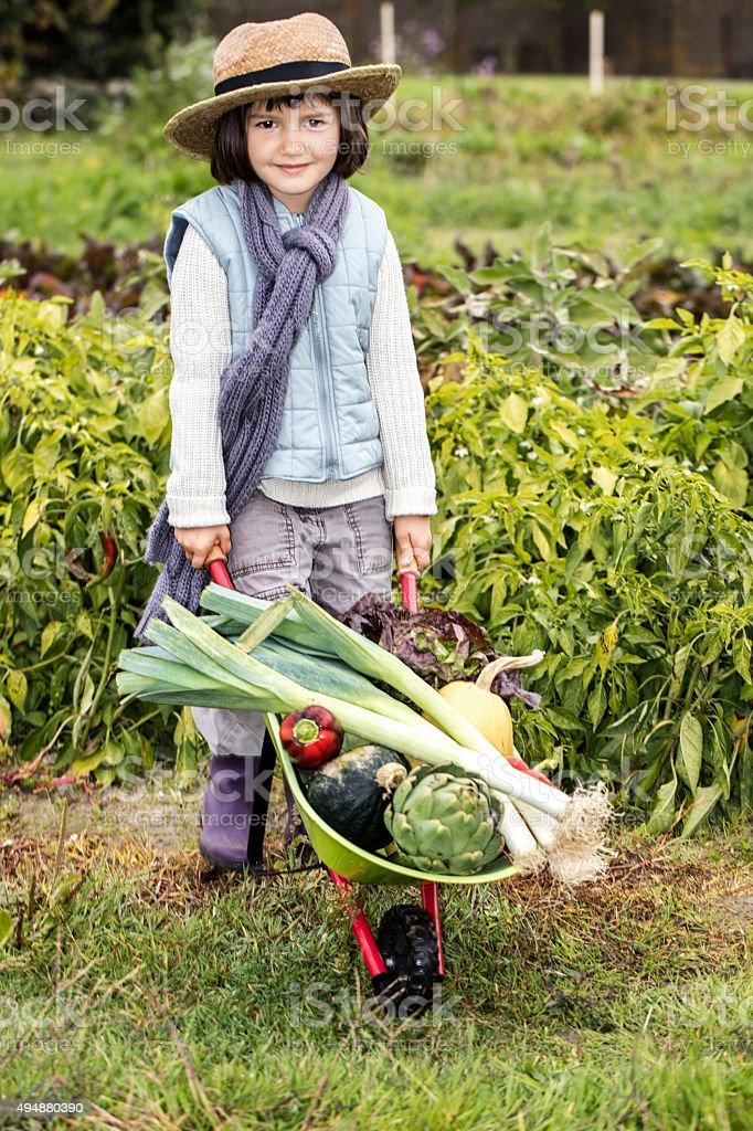 smiling little gardener pushing wheelbarrow of vegetables for healthy diet stock photo