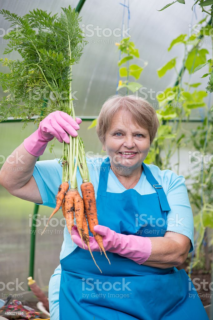 Smiling pensioner with carrot at green house stock photo