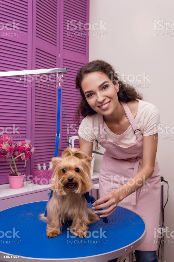 smiling professional groomer holding comb while grooming dog in pet salon stock photo