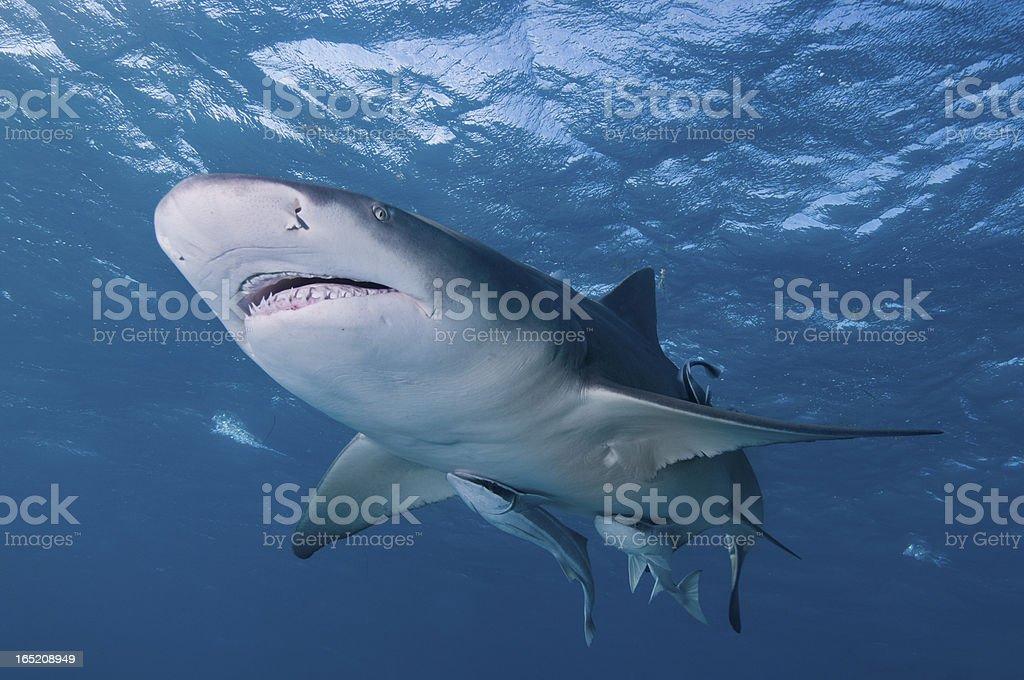 Smiling shark stock photo