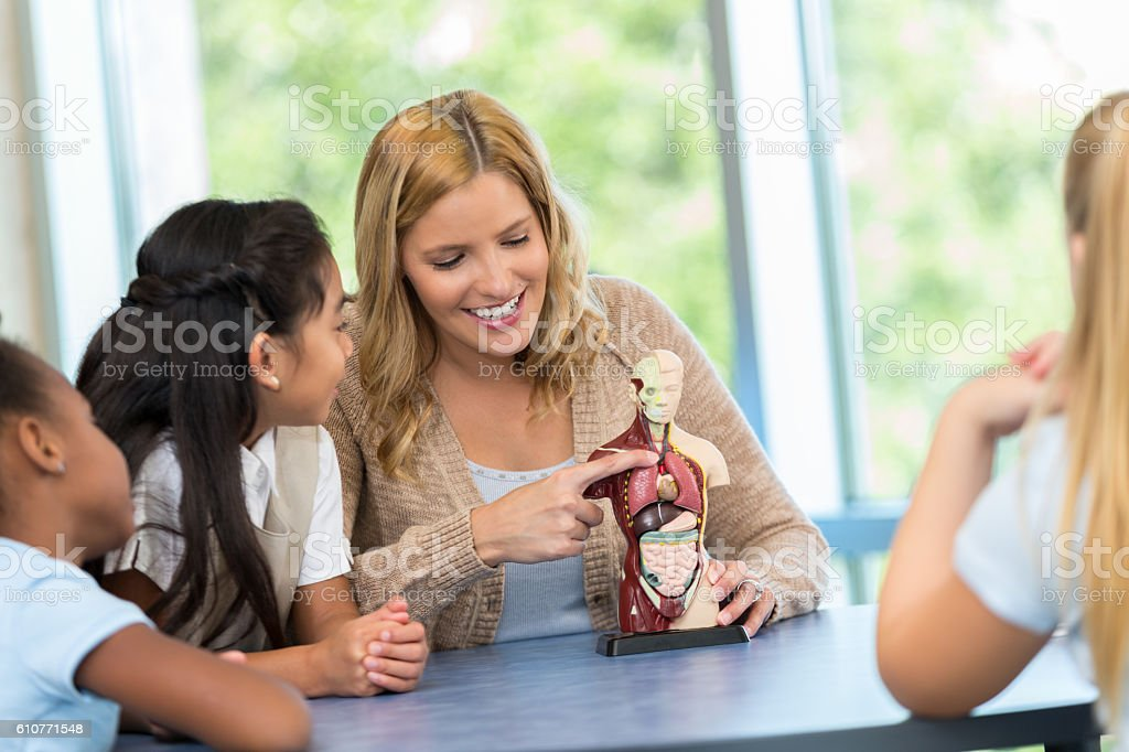 Smiling teacher showing young students model of the human body stock photo